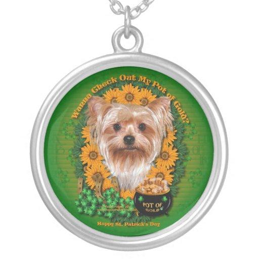 St Patricks - mina de oro - Yorkshire Terrier Grímpola