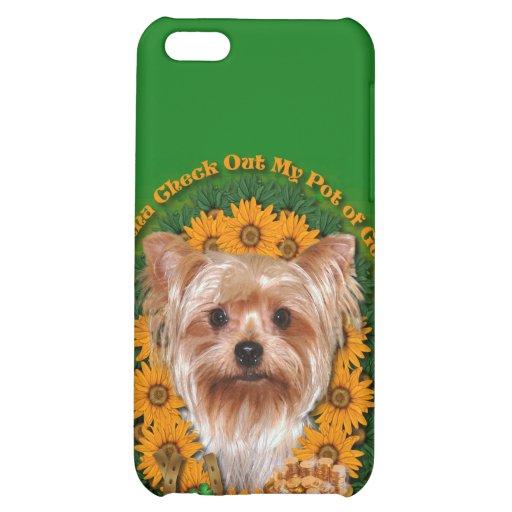 St Patricks - mina de oro - Yorkshire Terrier