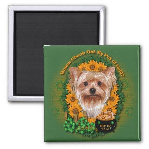 St Patricks - mina de oro - Yorkshire Terrier Imanes De Nevera
