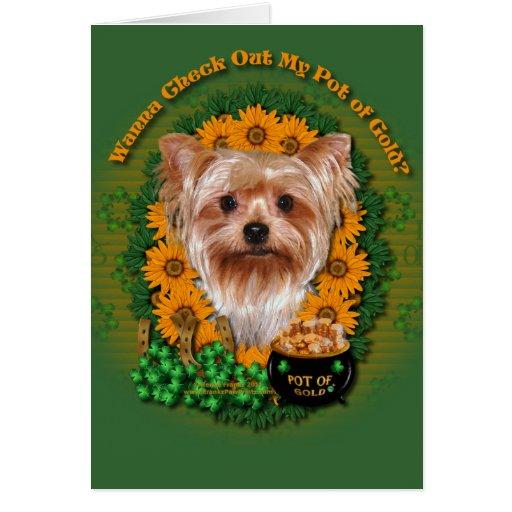 St Patricks - mina de oro - Yorkshire Terrier Tarjeton