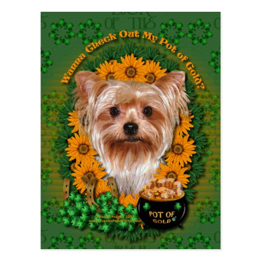 St Patricks - mina de oro - Yorkshire Terrier Tarjeta Postal