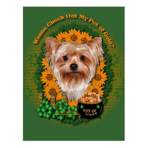 St Patricks - mina de oro - Yorkshire Terrier Postales