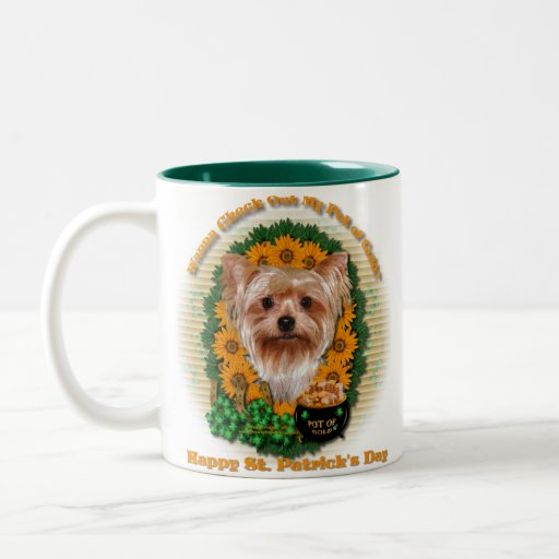 St Patricks - mina de oro - Yorkshire Terrier Tazas