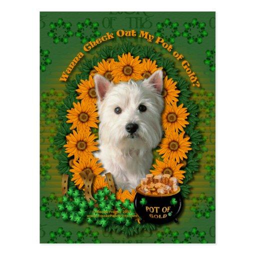 St Patricks - Pot of Gold - West Highland Terrier Postcard
