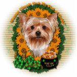 St Patricks - Pot of Gold - Yorkshire Terrier Acrylic Cut Outs