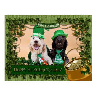 St Pats Day - GoldenDoodles - Sadie and Izzie Postcard