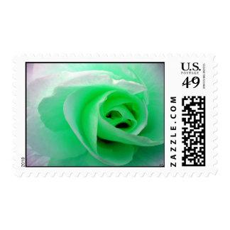 st pats rose, S Cyr Stamp