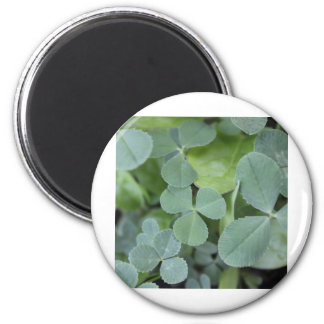 St Pattys Day Clover Mix Magnets