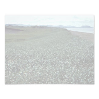 St. Paul Island, Sand dune habitat Pribilof Island Card