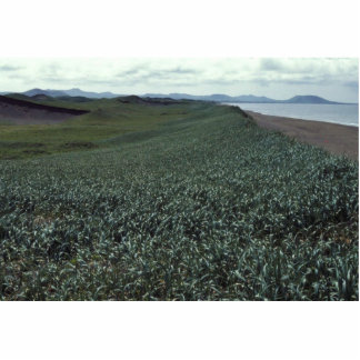 St. Paul Island, Sand dune habitat Pribilof Island Photo Sculpture