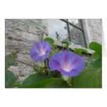 St. Paul's morning glory with window Greeting Card
