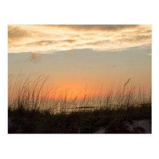 St. Petersburg Sunset Postcard