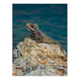 St Thomas iguana Tarjetas Postales