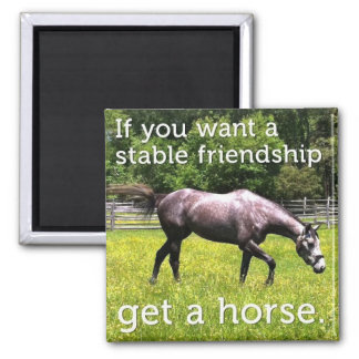 Stable Friendship Magnet