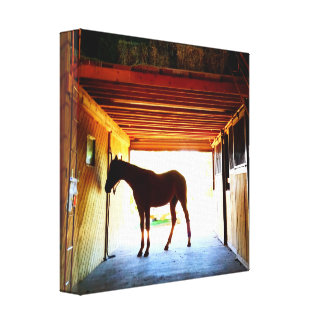 Stable Horse Canvas Print