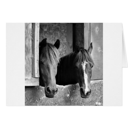 Stable mates greeting card