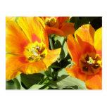 Stacey's Floral Design's Postcards