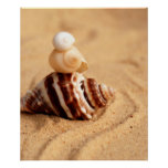 Stack of Pretty Conch Shells Posters