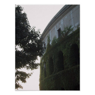 Stadium with Ivy and Tree Poster