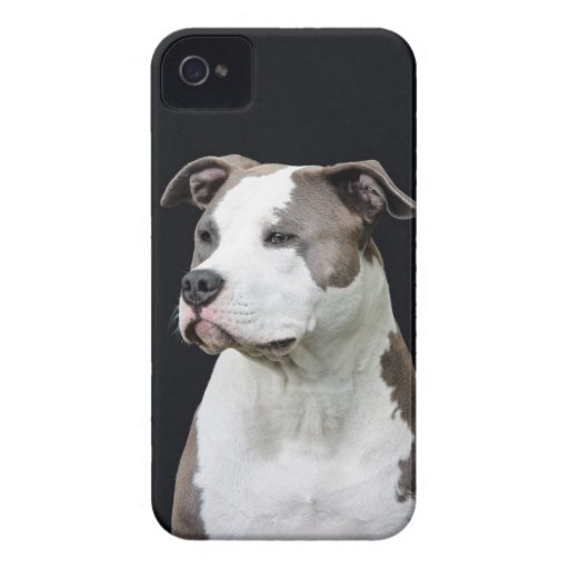 Staffhordshire terrier iPhone 4 Case-Mate cases