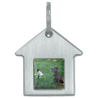 Staffies Waiting For Tasy Treats,_Kennel_Dog_Tag Pet Name Tag