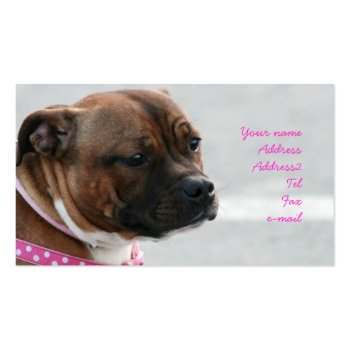 Staffordshire bull terrier business cards