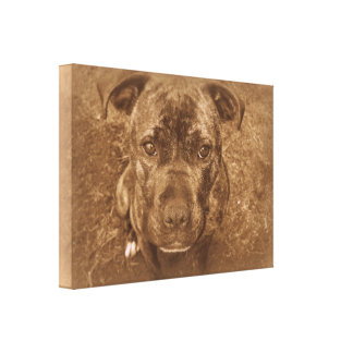 Staffordshire Bull Terrier Canvas Print