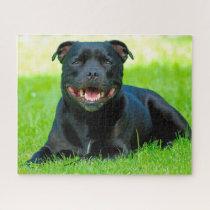 Staffordshire Bull Terrier Dog. Jigsaw Puzzle