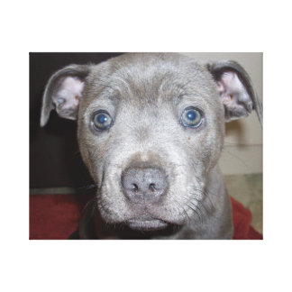 Staffordshire_Bull_Terrier,_Large_Canvas_Picture. Canvas Print