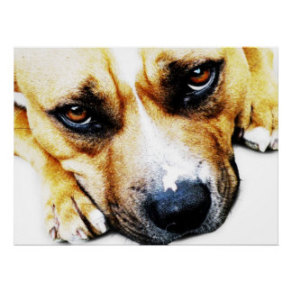 Staffordshire bull terrier posters