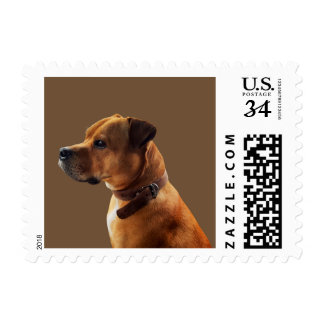Staffordshire Bull Terrier Postage