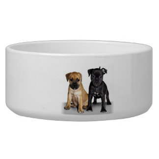 Staffordshire bull terrier puppies bowl