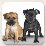 Staffordshire bull terrier puppies beverage coaster