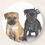 Staffordshire bull terrier puppies drink coasters