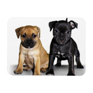 Staffordshire bull terrier puppies magnet