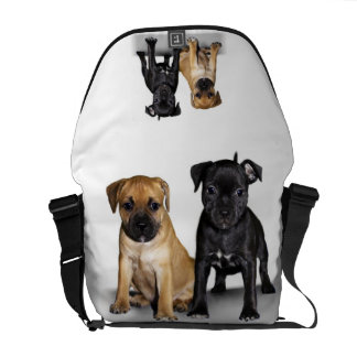 Staffordshire bull terrier puppies courier bags