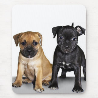 Staffordshire bull terrier puppies mouse pad