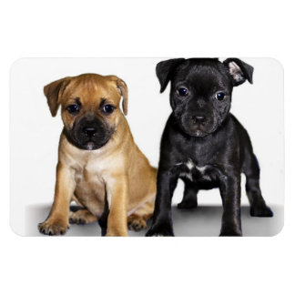 Staffordshire bull terrier puppies flexible magnets