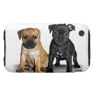 Staffordshire bull terrier puppies tough iPhone 3 case