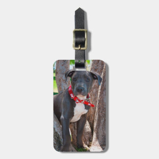 Staffordshire Bull Terrier puppy in a tree Bag Tag