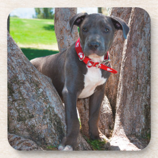 Staffordshire Bull Terrier puppy in a tree Coasters