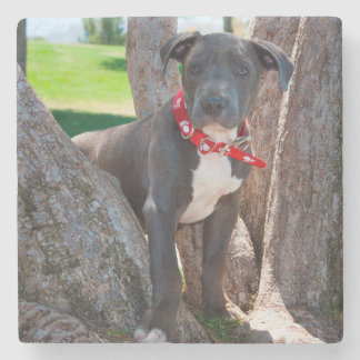 Staffordshire Bull Terrier puppy in a tree Stone Coaster