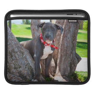 Staffordshire Bull Terrier puppy in a tree iPad Sleeves