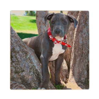 Staffordshire Bull Terrier puppy in a tree Wood Coaster