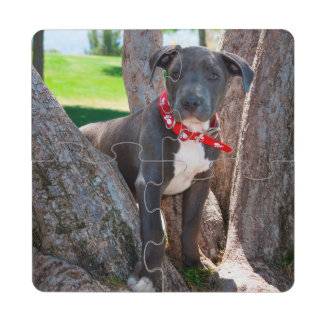 Staffordshire Bull Terrier puppy in a tree Puzzle Coaster