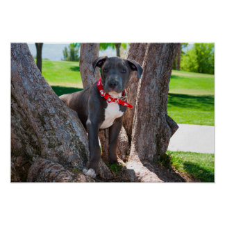 Staffordshire Bull Terrier puppy in a tree Posters