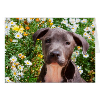 Staffordshire Bull Terrier puppy portrait Greeting Card