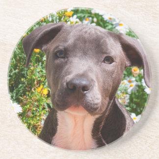 Staffordshire Bull Terrier puppy portrait Beverage Coaster
