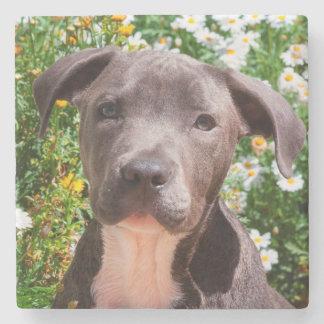 Staffordshire Bull Terrier puppy portrait Stone Beverage Coaster