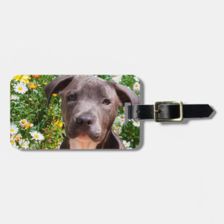Staffordshire Bull Terrier puppy portrait Luggage Tag